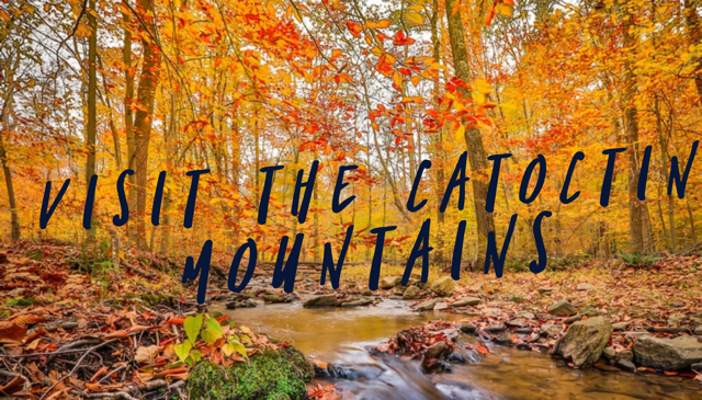 Fall Visit to Catoctin Mountains