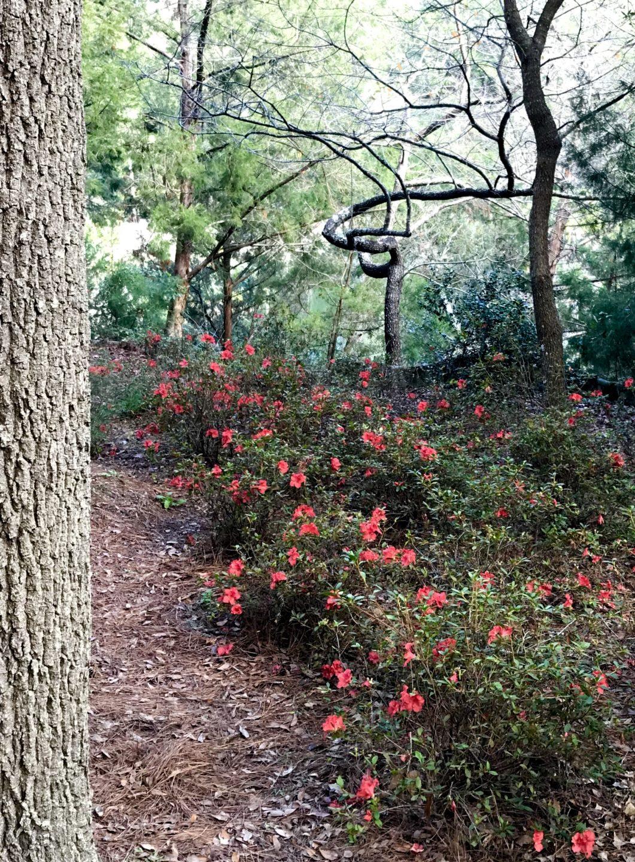 Garden in Archer, FL