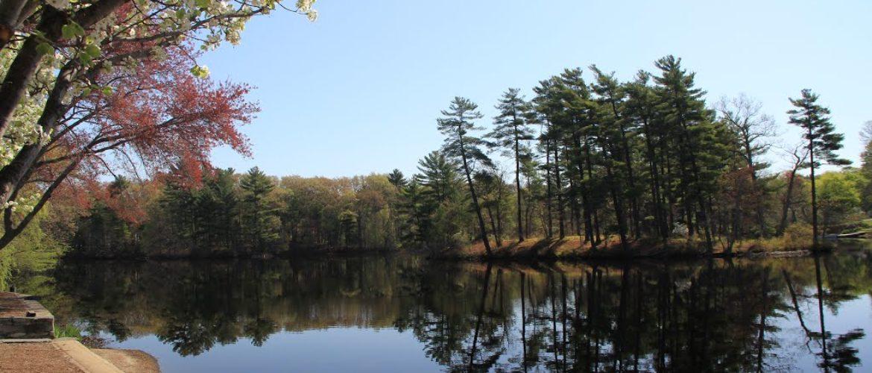 Johnson's Pond