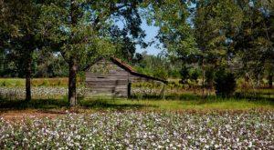 Smith Lake Alabama Real Estate