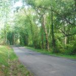 Forest VA Real Estate