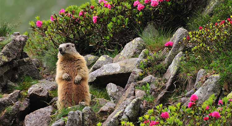 Chesapeake Real Estate:  What Does a Groundhog really Know?
