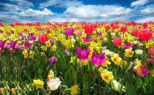 Las Vegas Spring Market Report