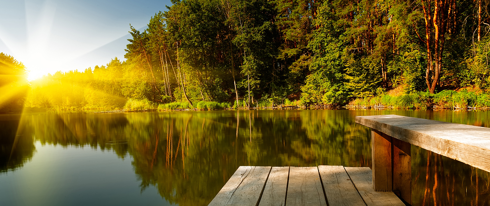 Forest lake