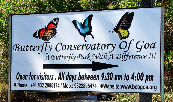 butterfly conservatory pic