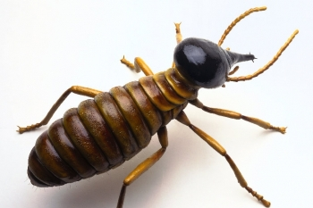 Free Termite Inspection with Home Inspection