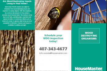 Wood Destroying Insects Brochure