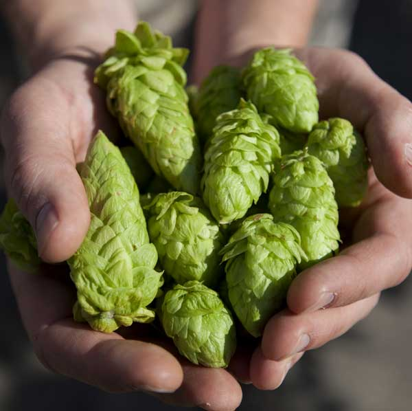 hop-substitution-featured