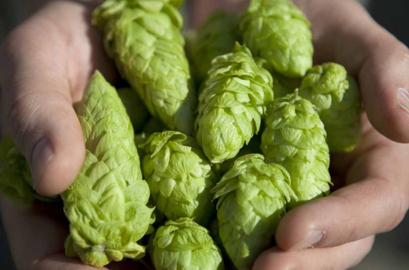 how-to-grow-hops-slider