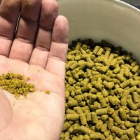 Lupulin Powder and Hop Oil Experimentation