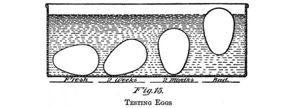 [egg-hydrometer-testing-the-freshness-of-an-egg-smaller-size]