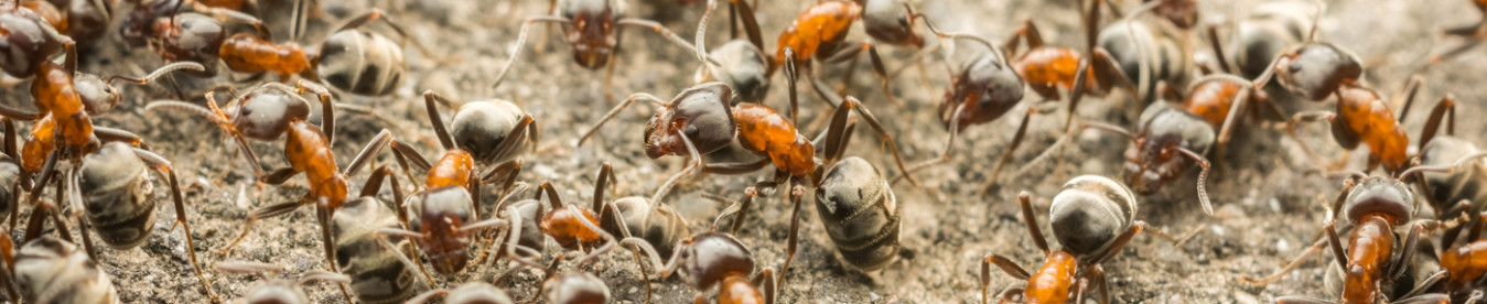 New Jersey Ant Control