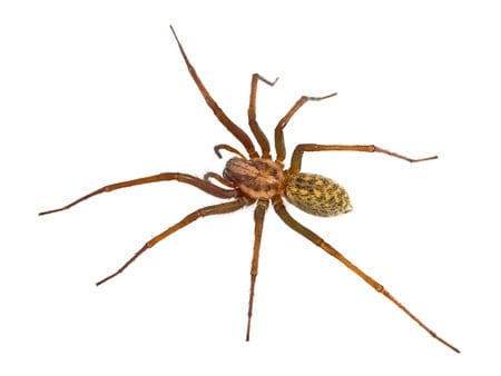 New Jersey Spider Control