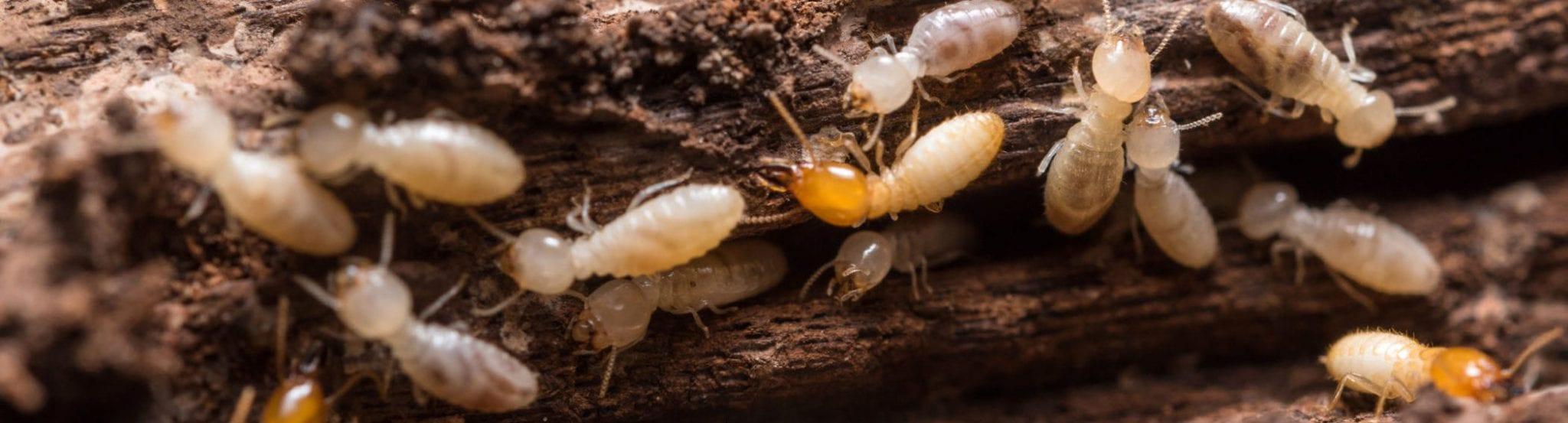 New Jersey Termite Control