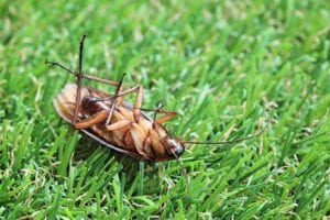 New Jersey Cockroach Control