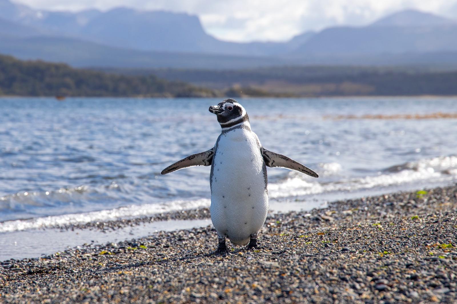 Magdalena Island - Punta Arenas