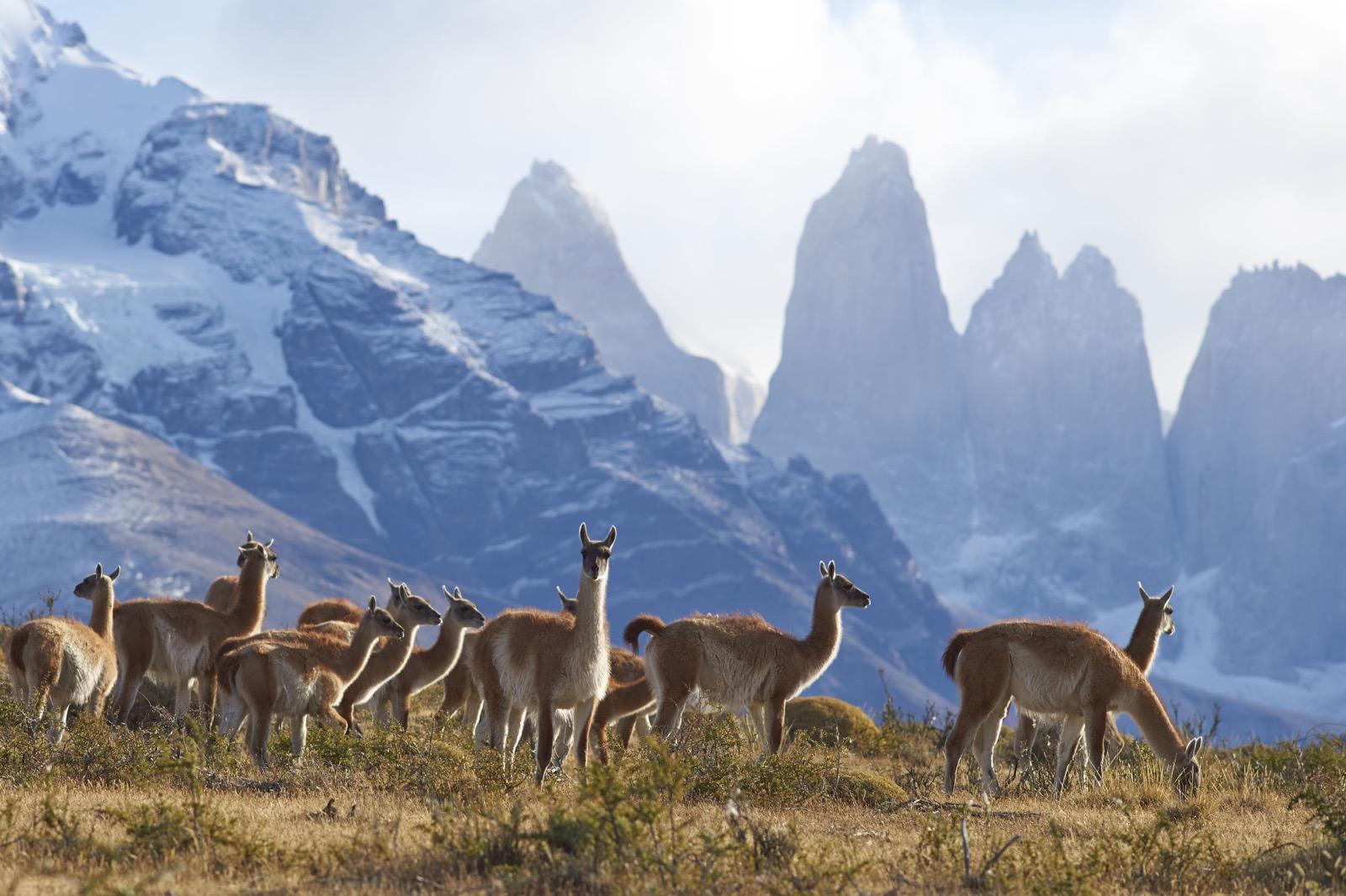 Santiago – Torres del Paine