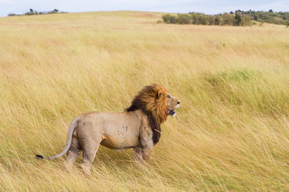 Arrival and transfer to Masai Mara