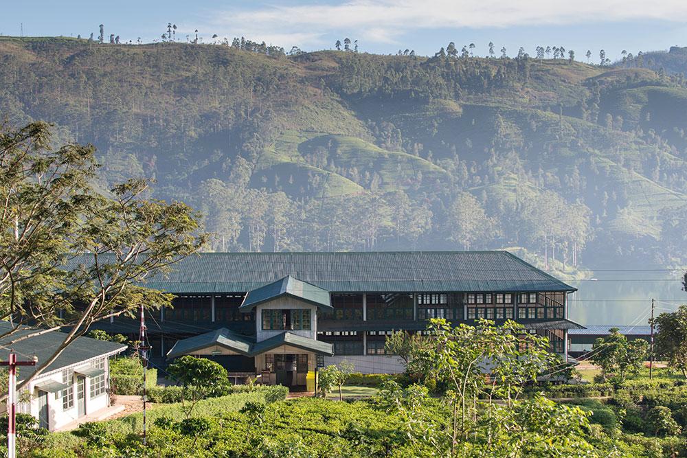Hotel: Ceylon Tea Trails