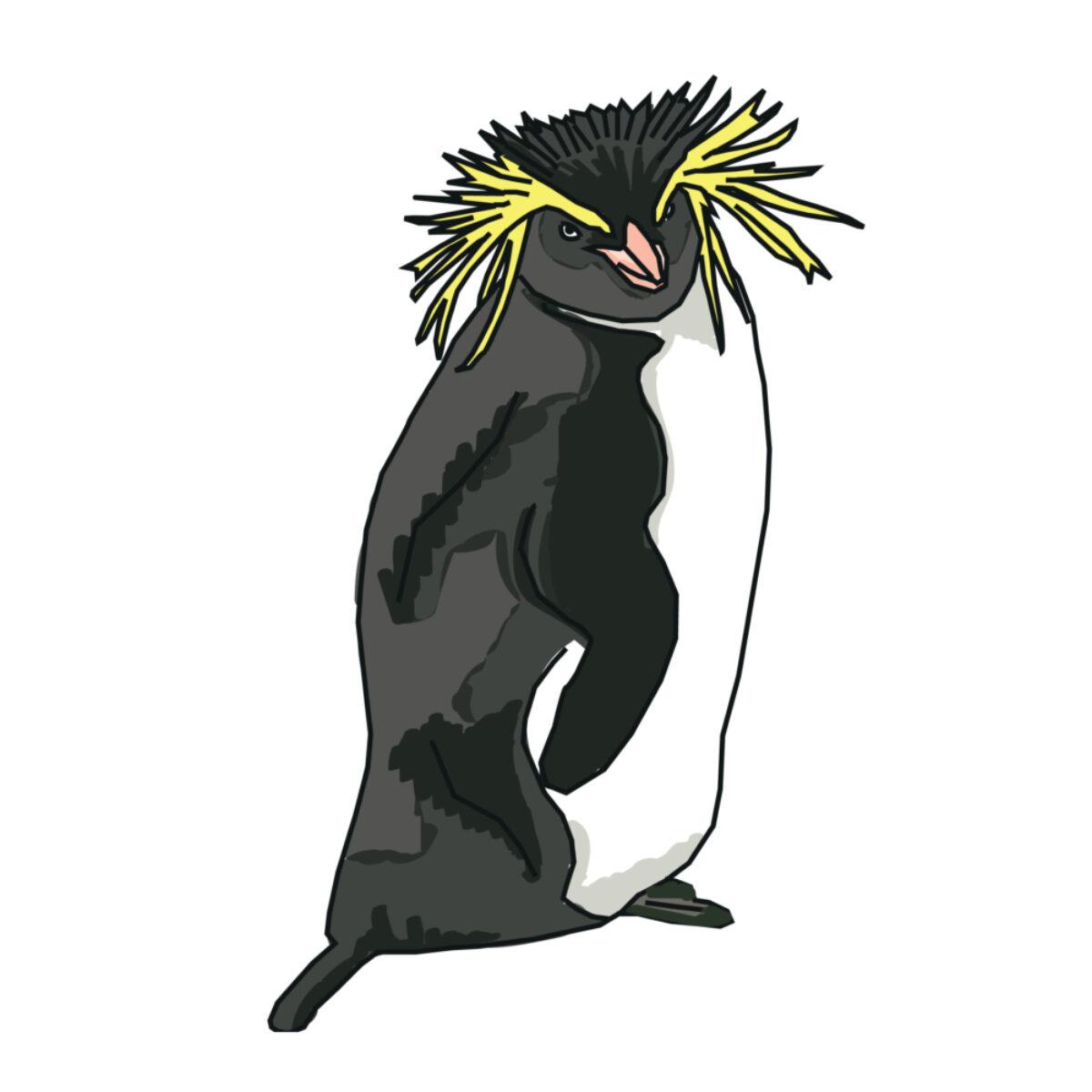 Rockhopper_penguin
