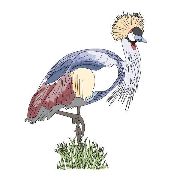 Uganda Grey Crowned Crane
