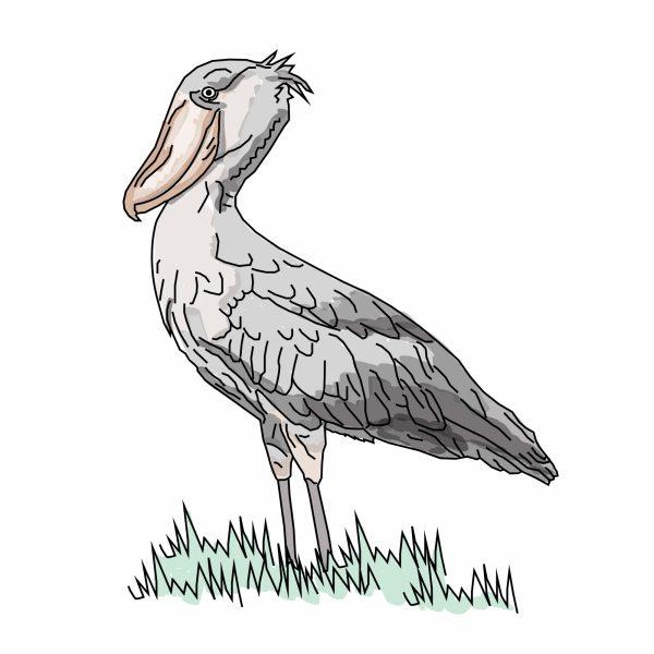 Uganda Shoebill Crane