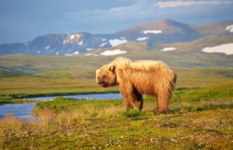 Basecamp bears at Katmai National Park