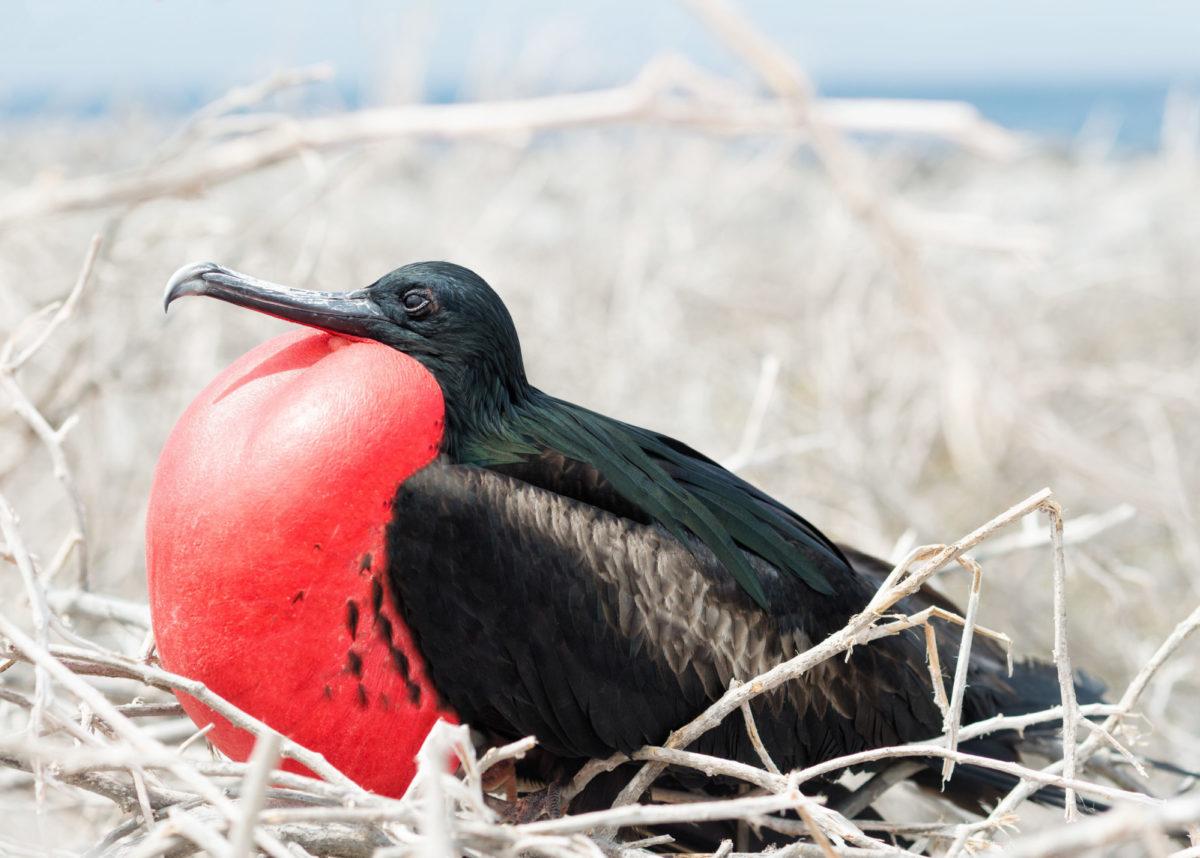 Birdwatching on Genovesa Island