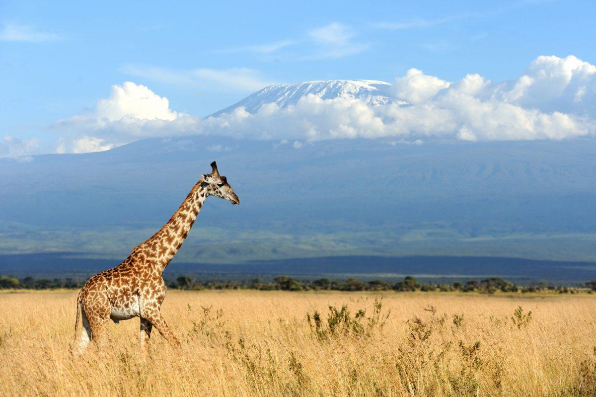 Kilimanjaro and Tanzania Wildlife Adventure