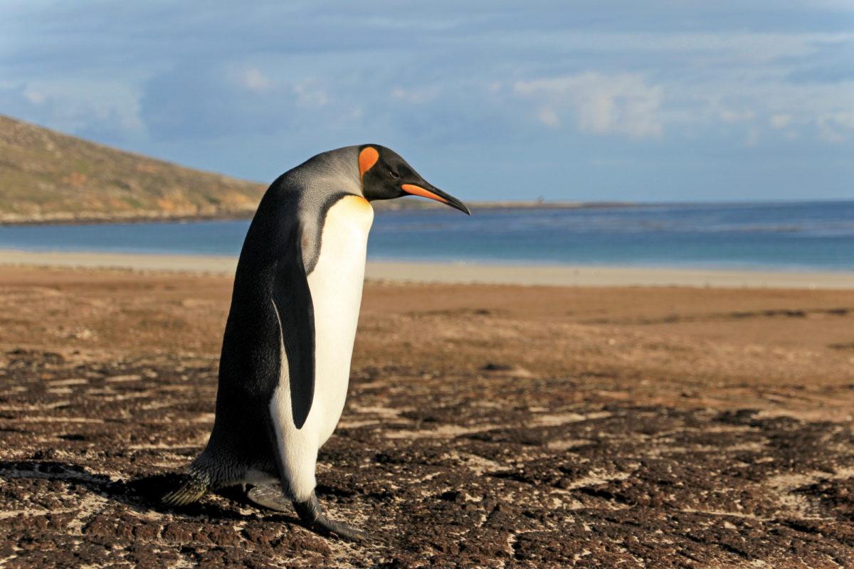 Antarctica, South Georgia & Falklands