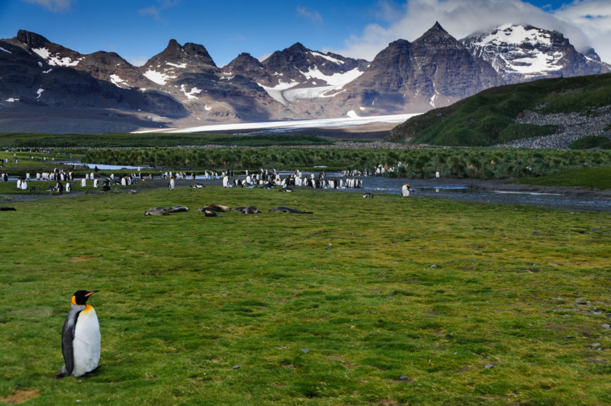 Patagonia Fjords, Antarctica & Falklands