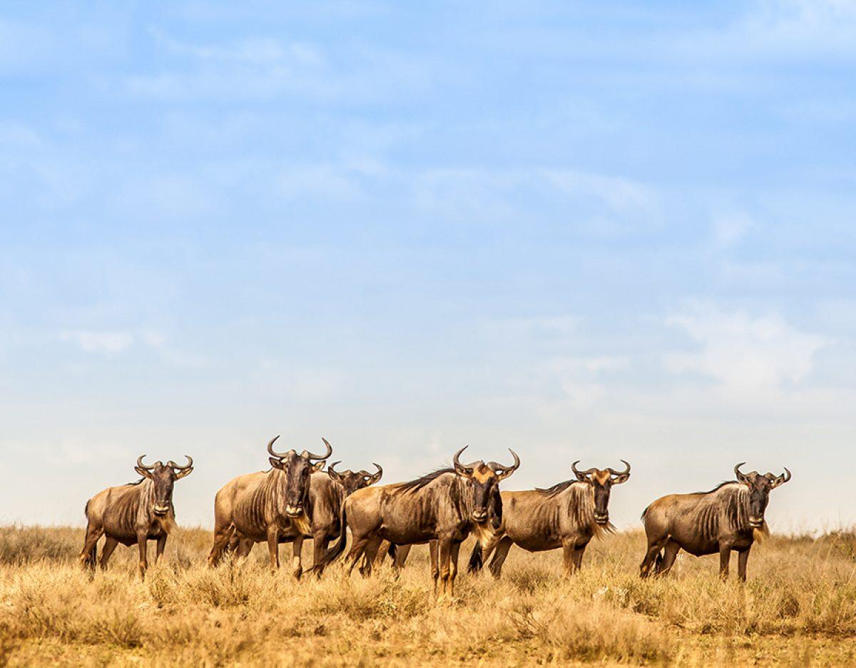 Ultimate Tanzanian safari
