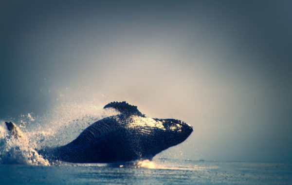 Spot whales on the Aleutian Islands