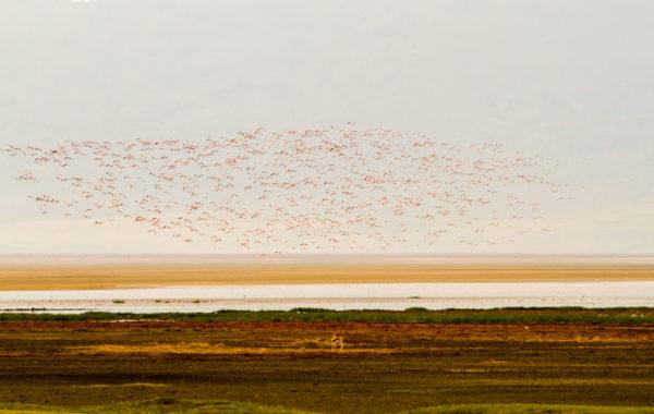 Safari at Ngorongoro crater