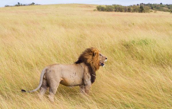 Arrival and transfer to Masai Mara
