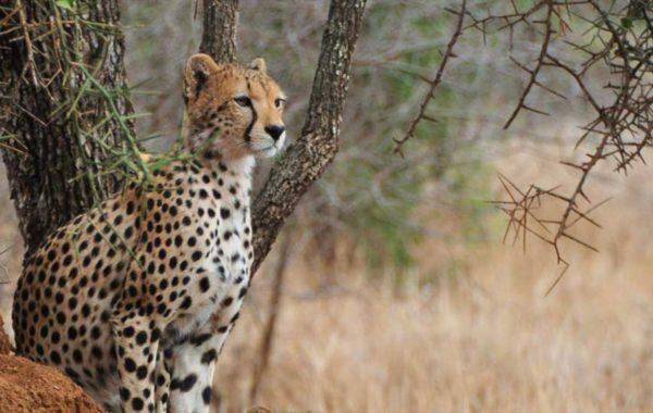 Safari in central Serengeti