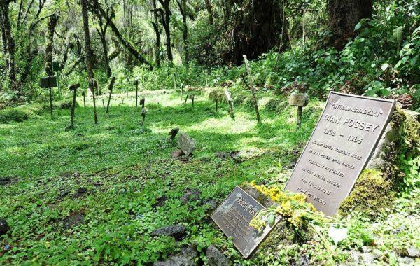 Visit Dian Fossey's grave