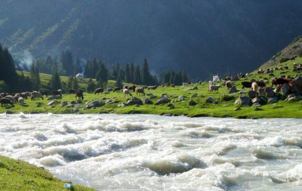 Trekking: Altyn Arashan - Karakol