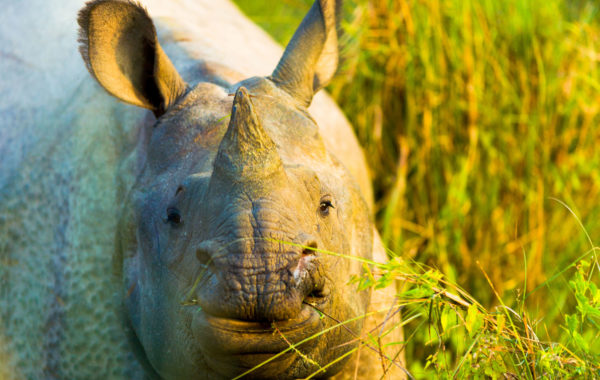 Spot wildlife in Chitwan National Park
