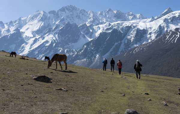 Trek the alpine Langtang Valley