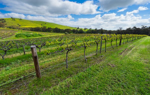 Go wine-tasting in the Barossa Valley