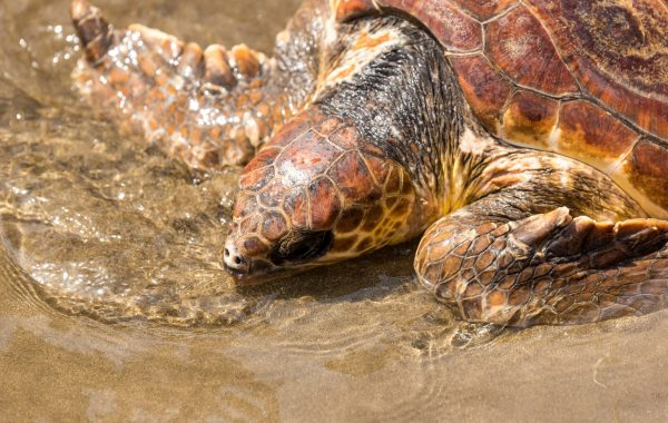 Watch turtles hatch at Mon Repos, near Bundaberg