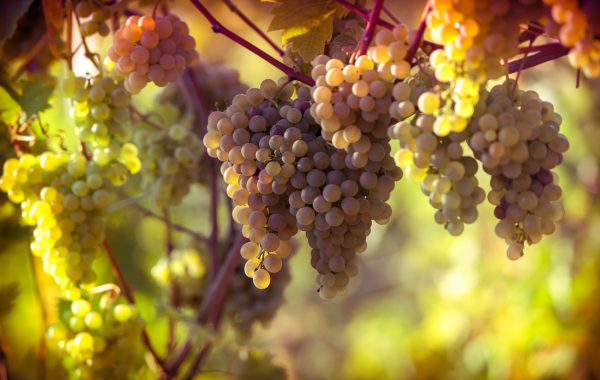 Go wine-tasting in a monastery
