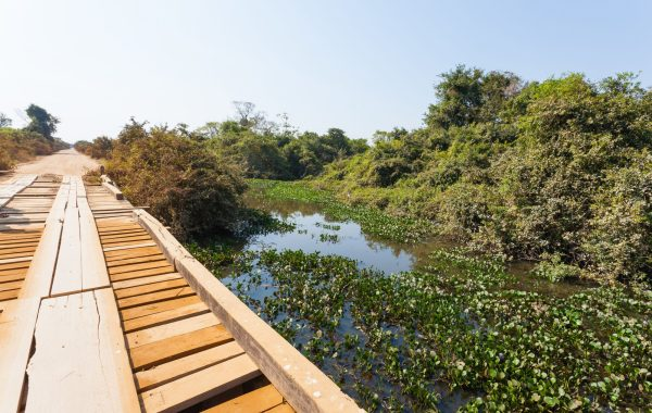 Explore the Pantanal on the Transpantaneira Highway