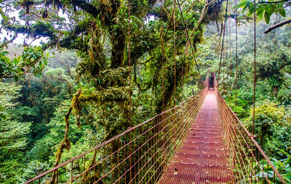 Lose your head in the clouds at Monteverde
