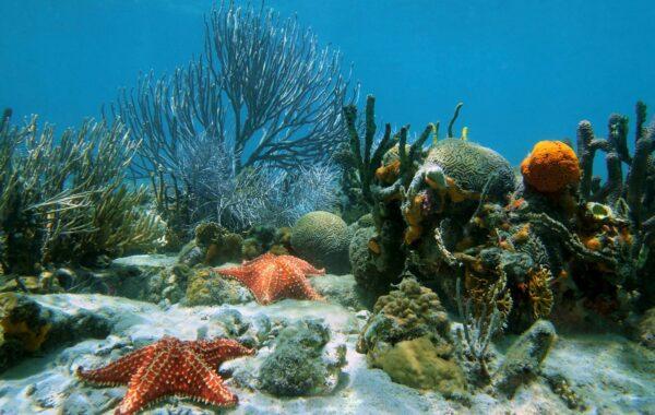 Snorkelling in Cahuita