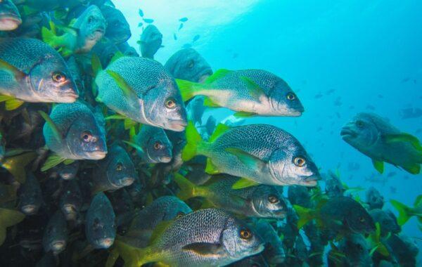 Explore the underwater caves of Punta Vicente Roca