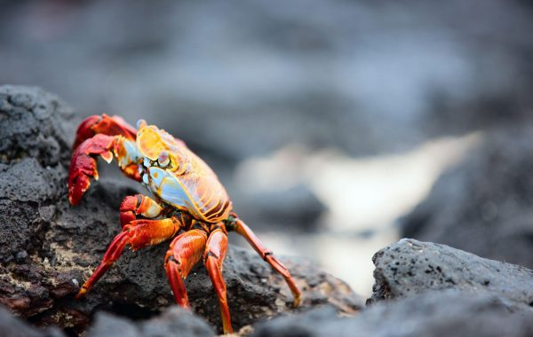 Explore Punta Espinosa colourful sea life