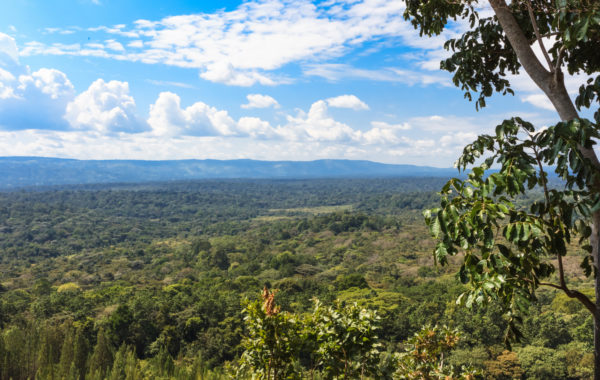 Go hiking in Kakamega