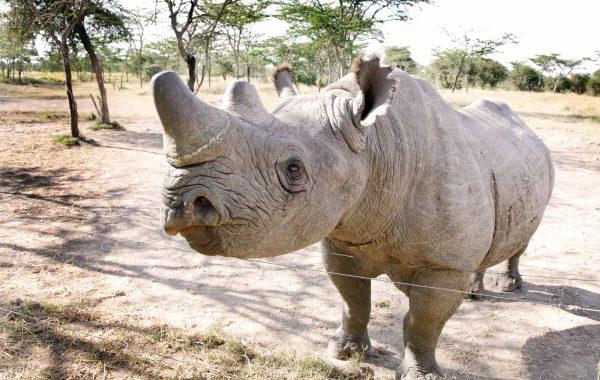 See the rhino sanctuary of Ol Pejeta